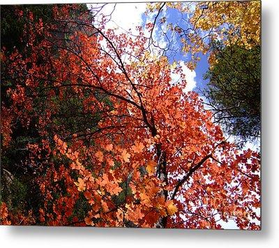 Fall Colors 6340 Metal Print