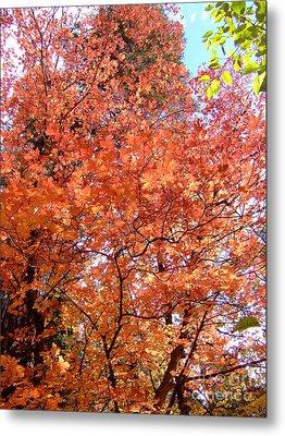 Fall Colors 6357 Metal Print