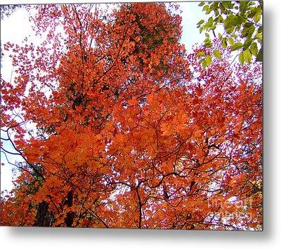 Fall Colors 6359 Metal Print