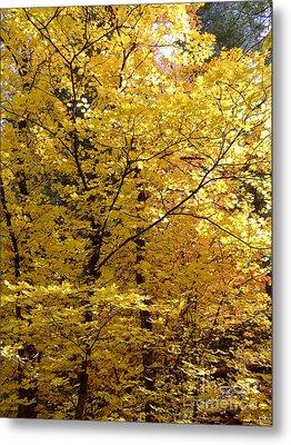 Fall Colors 6371 Metal Print