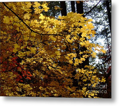 Fall Colors 6372 Metal Print