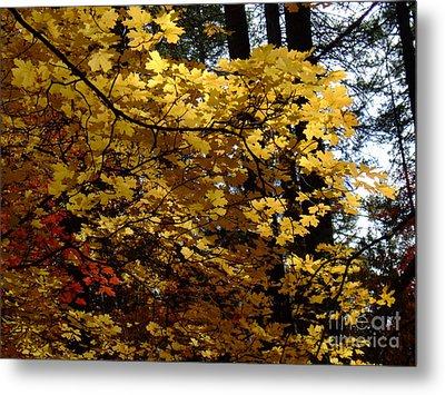 Fall Colors 6372 Metal Print by En-Chuen Soo
