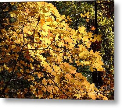 Fall Colors 6407 Metal Print
