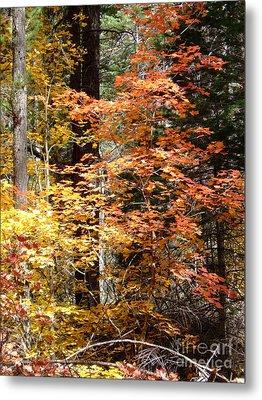 Fall Colors 6412 Metal Print