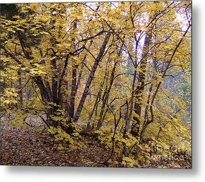Fall Colors 6435 Metal Print