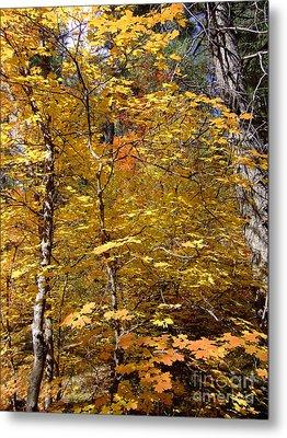 Fall Colors 6446 Metal Print