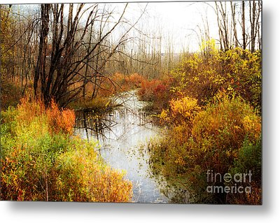 Fall Colors  Metal Print by A New Focus Photography