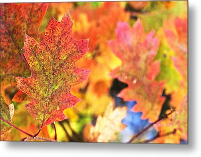 Metal Print featuring the photograph Fall Colors by Arkady Kunysz