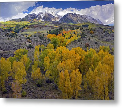 Fall Colors At Chair Mountain Colorado Metal Print by Tim Fitzharris