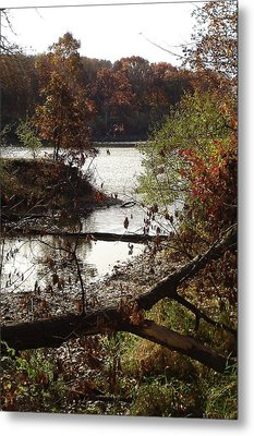 Metal Print featuring the photograph Fall Colors by J L Zarek