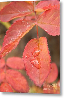 Fall Colors Metal Print by Jennifer Kimberly