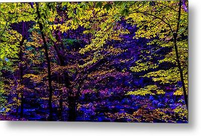Fall Colors Metal Print by Louis Dallara