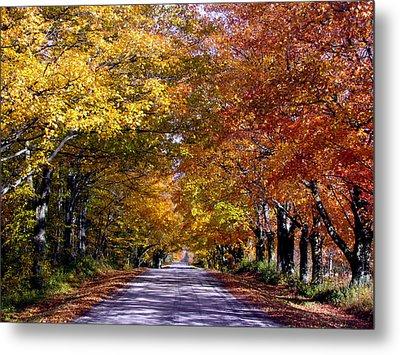Fall Colors Near Sister Bay Metal Print by David T  Wilkinson