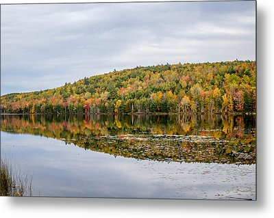 Fall Colors  Metal Print by Trace Kittrell