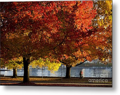 Fall Colour In Stanley Park Metal Print by Maria Janicki
