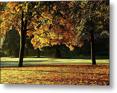 Fall Colours Metal Print