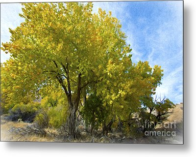 Fall Cottonwoods Metal Print by Dianne Phelps