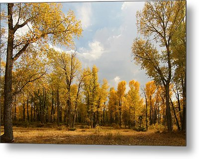 Metal Print featuring the photograph Fall Cottonwoods In Gros Ventre by Jeremy Farnsworth