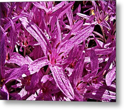Metal Print featuring the photograph Fall Crocus by Nick Kloepping