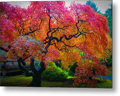 Fall Crowning Glory  Metal Print by Patricia Babbitt