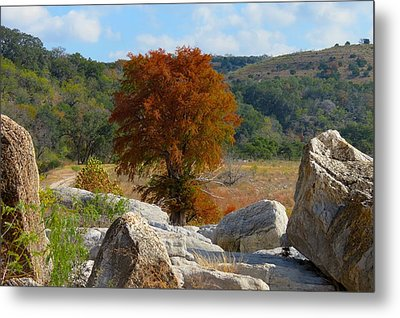 Metal Print featuring the photograph Fall Cypress by David  Norman