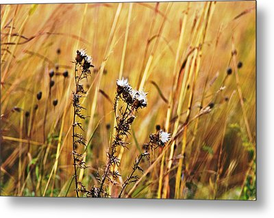 Fall Flowers Metal Print by Mark Russell