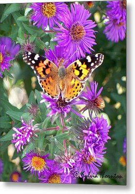 Metal Print featuring the photograph Fall Flutterby by Sylvia Thornton
