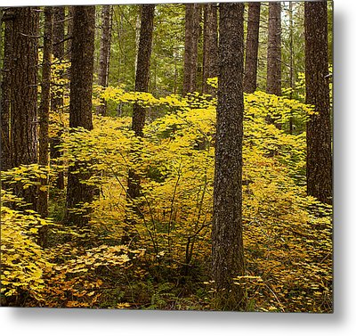 Metal Print featuring the photograph Fall Foliage by Belinda Greb
