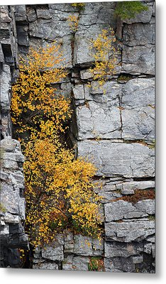 Metal Print featuring the photograph Fall Foliage Colors 01 by Metro DC Photography