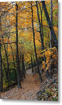 Metal Print featuring the photograph Fall Foliage Colors 03 by Metro DC Photography