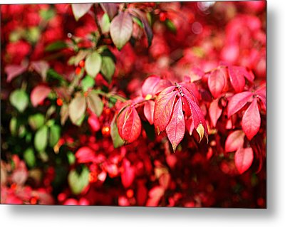 Metal Print featuring the photograph Fall Foliage Colors 10 by Metro DC Photography