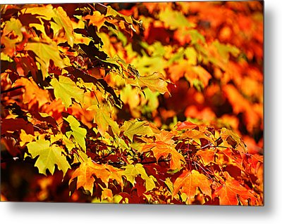Metal Print featuring the photograph Fall Foliage Colors 13 by Metro DC Photography
