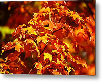 Metal Print featuring the photograph Fall Foliage Colors 14 by Metro DC Photography