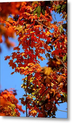 Metal Print featuring the photograph Fall Foliage Colors 15 by Metro DC Photography