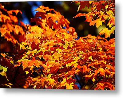 Metal Print featuring the photograph Fall Foliage Colors 16 by Metro DC Photography