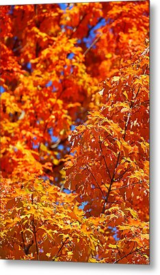 Metal Print featuring the photograph Fall Foliage Colors 17 by Metro DC Photography