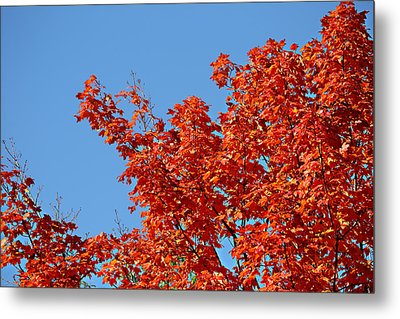 Metal Print featuring the photograph Fall Foliage Colors 20 by Metro DC Photography