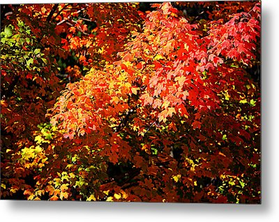 Metal Print featuring the photograph Fall Foliage Colors 21 by Metro DC Photography