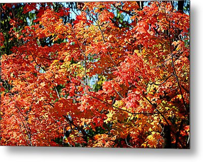 Fall Foliage Colors 22 Metal Print by Metro DC Photography