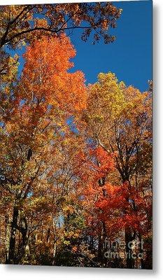 Fall Foliage Metal Print by Patrick Shupert