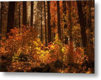 Fall Forest  Metal Print by Saija  Lehtonen