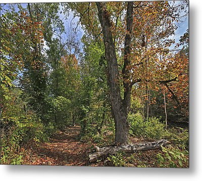 Fall Forest Trail Ozark-saint Francis Metal Print