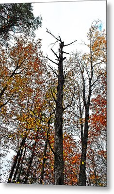 Fall Forrest Metal Print by Stephanie Grooms