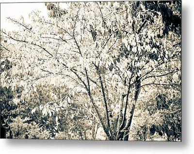 Fall In Black And White Metal Print by Ronda Broatch