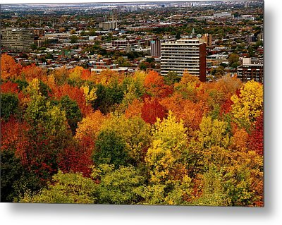 Fall In Colors 1 Metal Print by Jocelyne Choquette