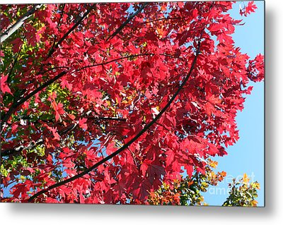 Metal Print featuring the photograph Fall In Illinois by Debbie Hart