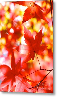 Fall In Love Again Metal Print