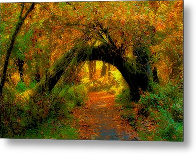 Fall In Olympia National Forest Metal Print