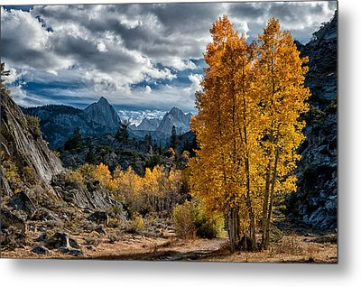 Fall In The Eastern Sierra Metal Print by Cat Connor