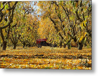 Fall In The Peach Orchard Metal Print by Jim And Emily Bush